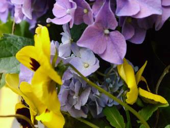 Flowers outside Finale in May