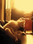 Evening Nap