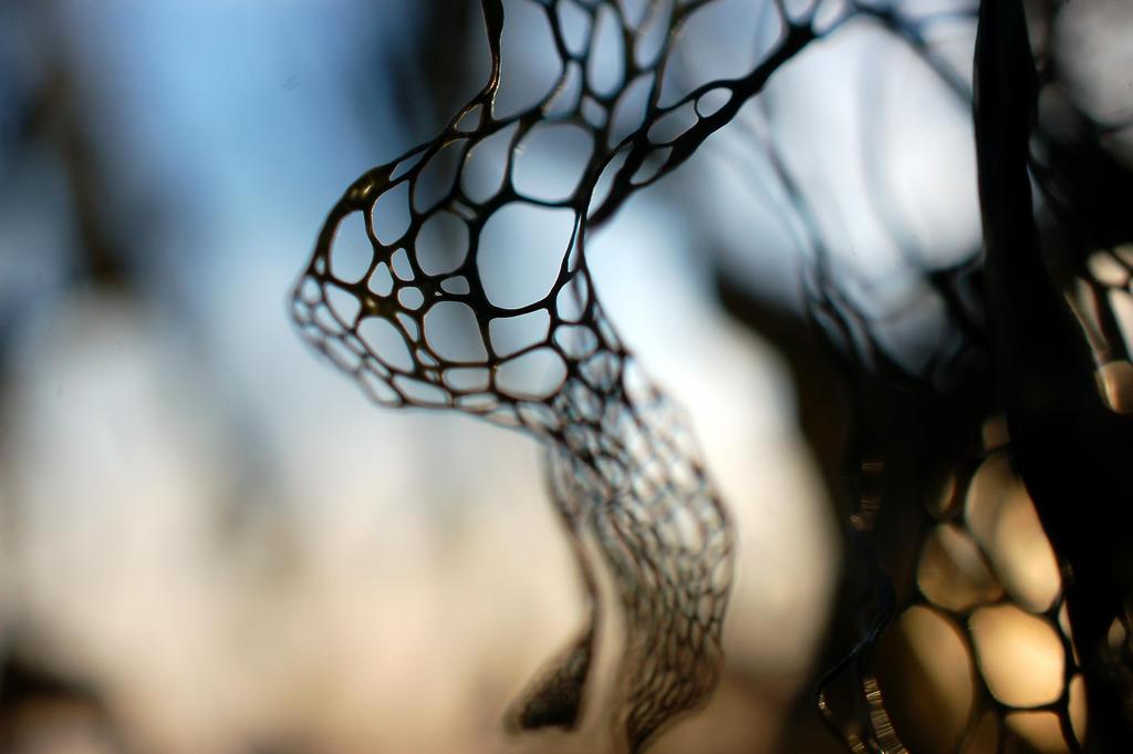 Nature's Craftsmanship by smfoley