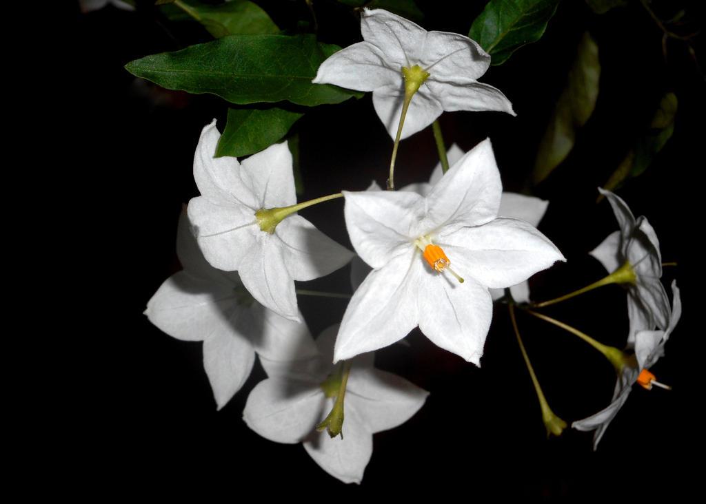 Jasmine in the Dark by smfoley