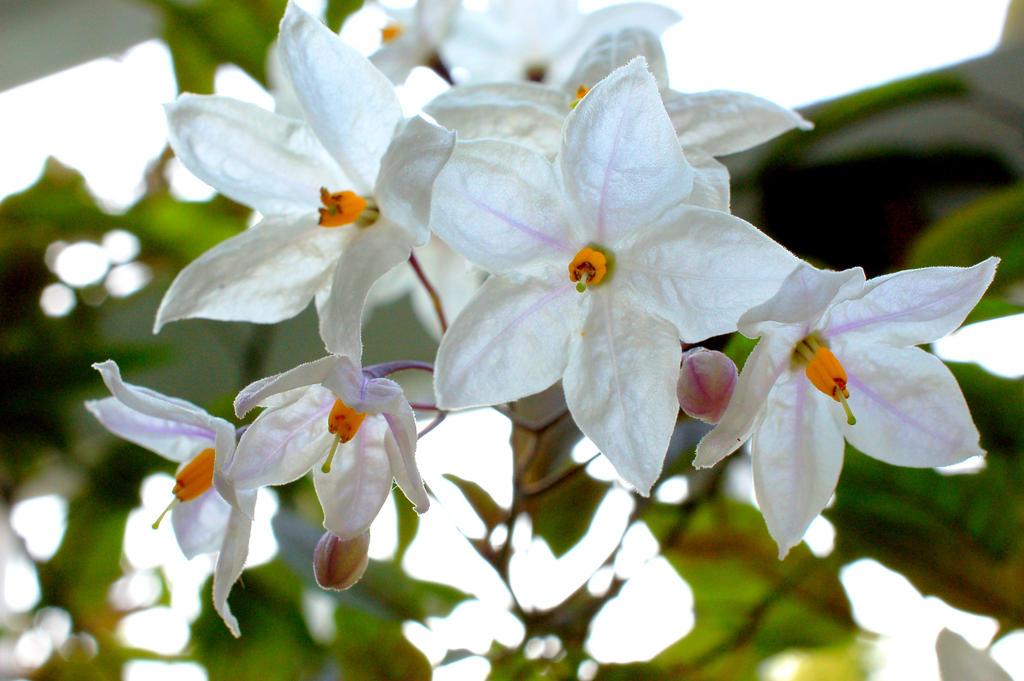 Spring Jasmine by smfoley