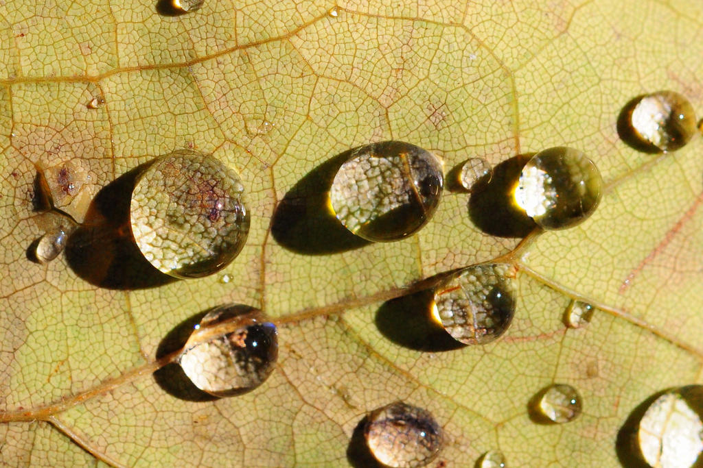 Autumn Dew Drops by smfoley