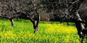 Spring in Sonoma Co.