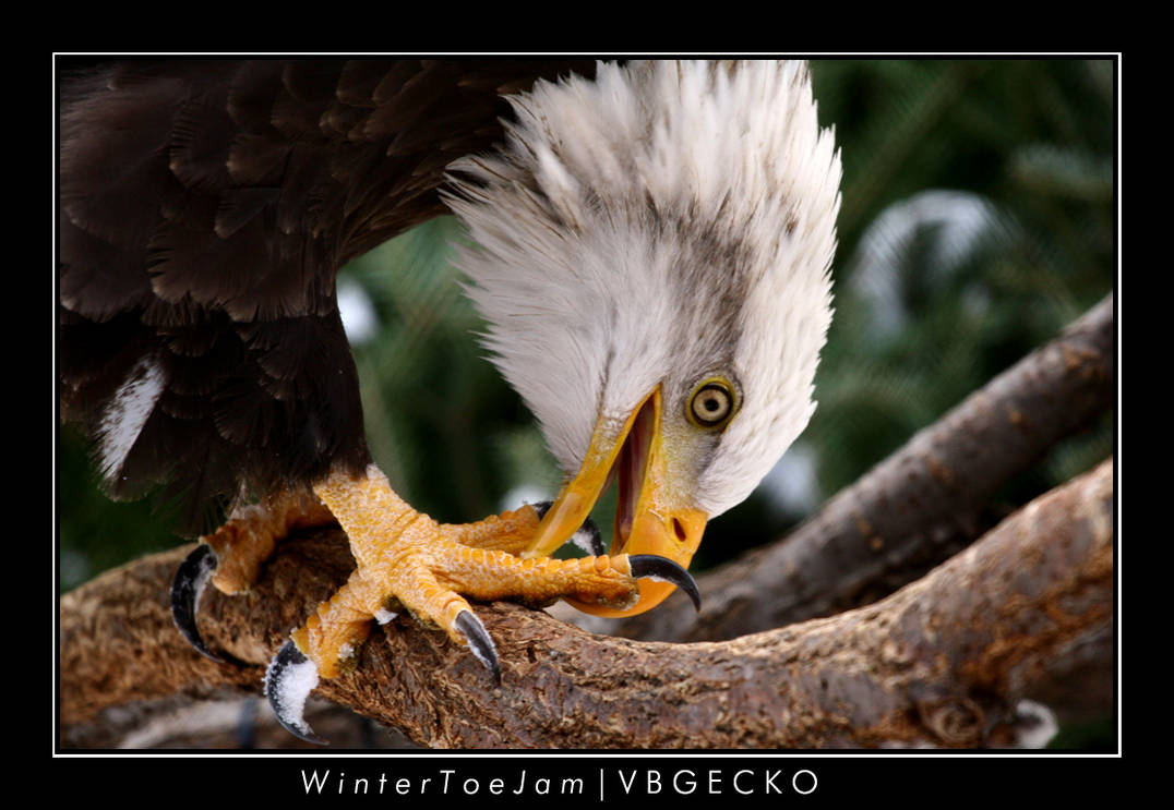 Winter Toe Jam by vbgecko