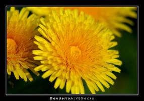 Dandelion by vbgecko