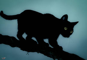 Night cat II by valiunic