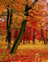 Autumn III by valiunic