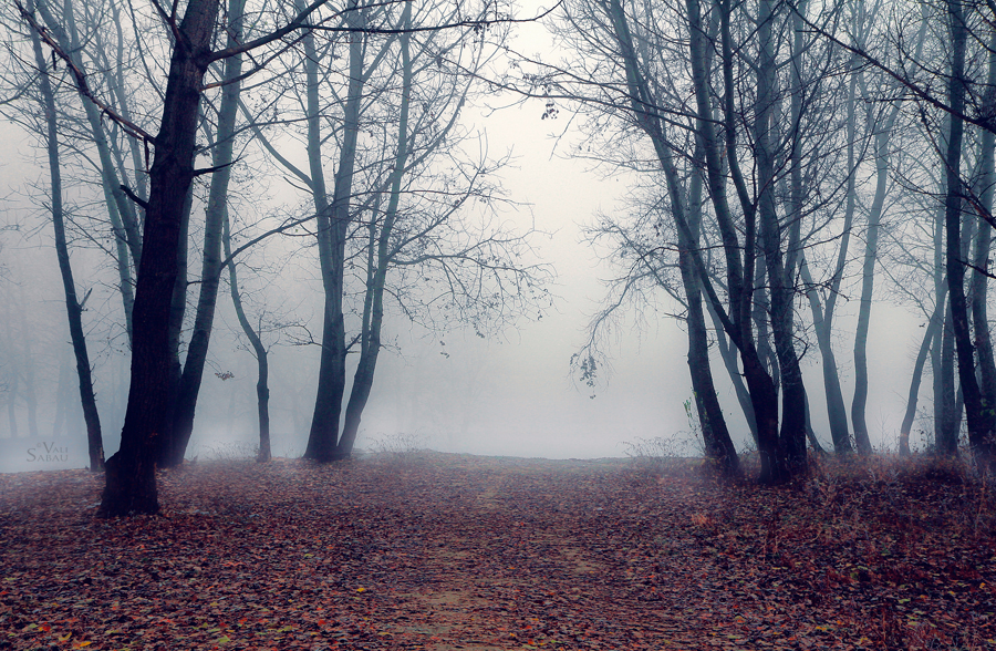 Foggy Woods by valiunic