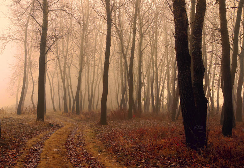 Fogy Forest by valiunic