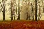 Foggy Woods III