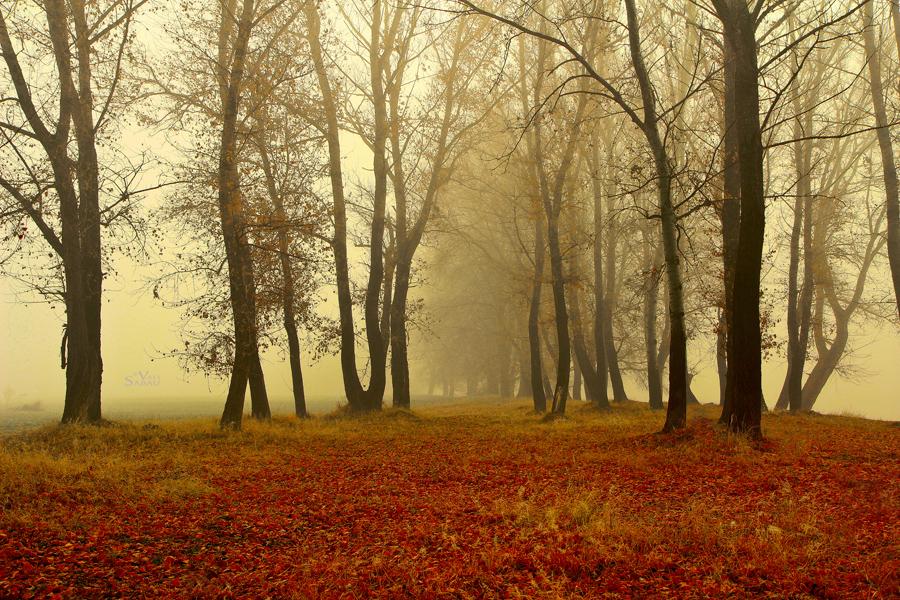 Foggy Woods III by valiunic