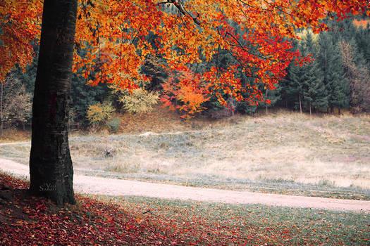 A piece of autumn II