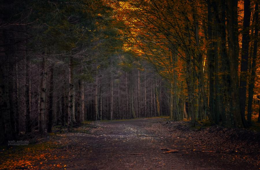 Dark road II by valiunic
