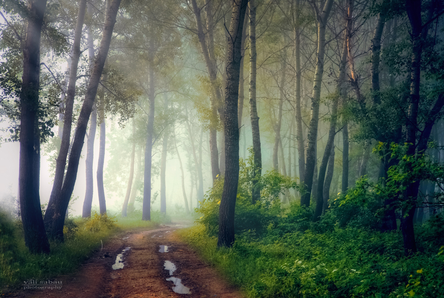 Mystical Forest II by valiunic