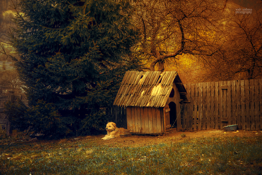 Good night, puppy! by valiunic