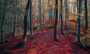 Autumn in the forest V