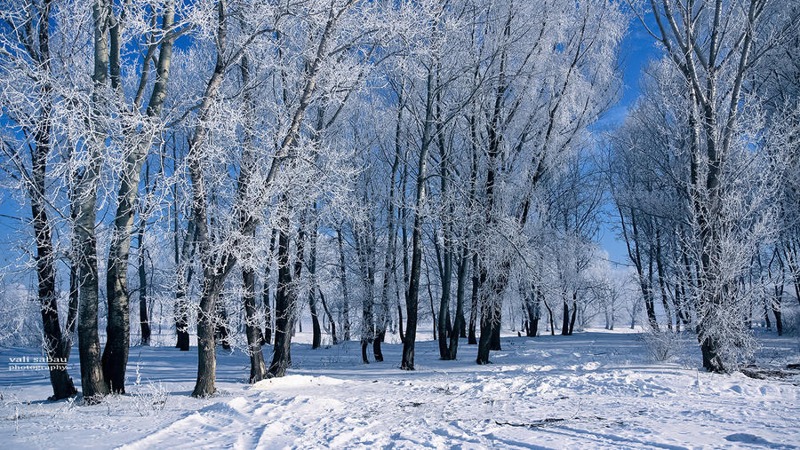 Snow Trees II by valiunic