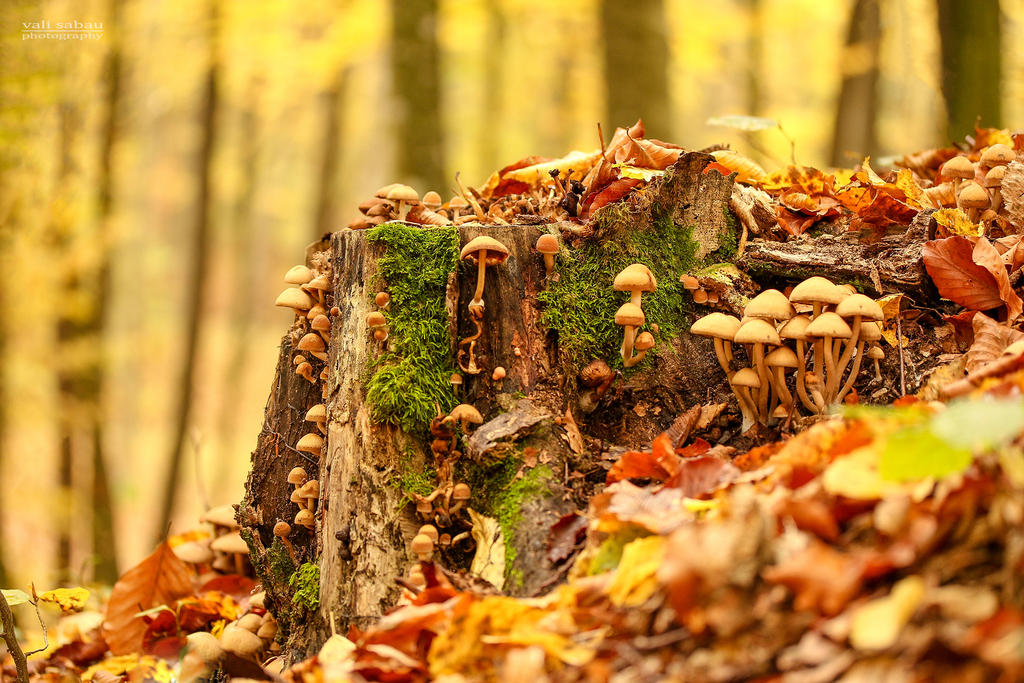 Fungi by valiunic