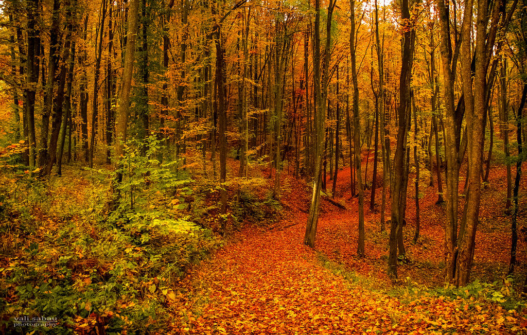 Path through autumn forest by valiunic