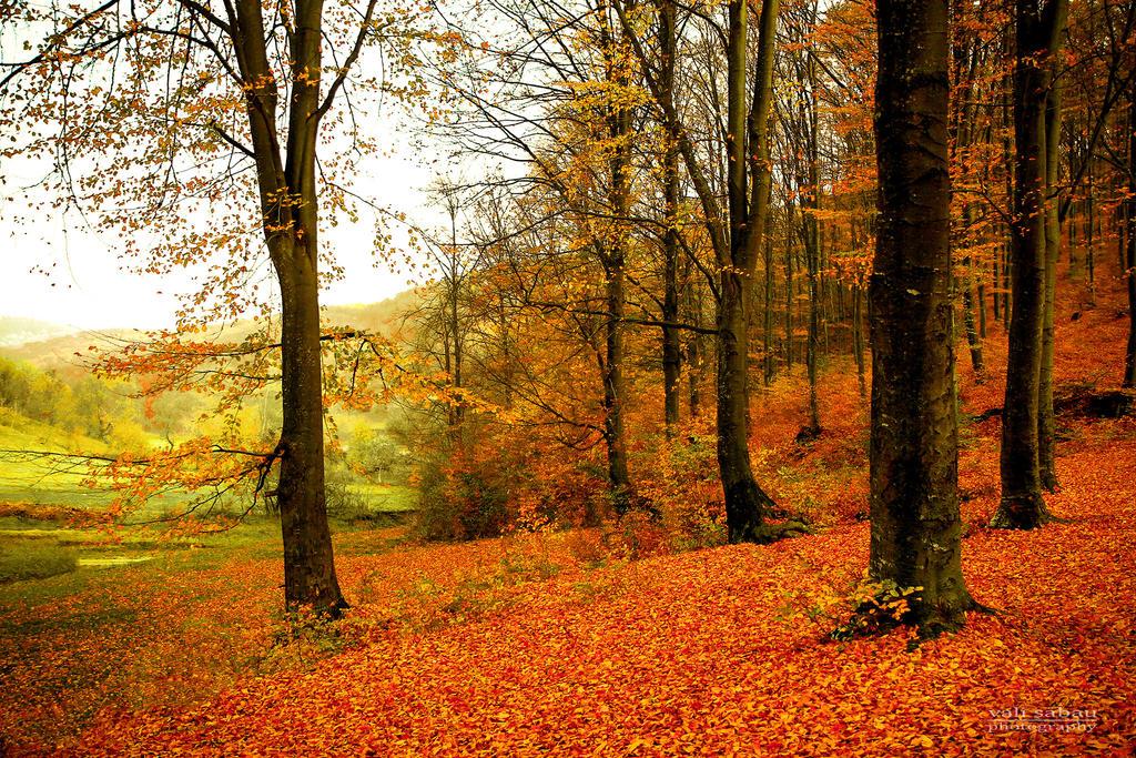 Fall by valiunic