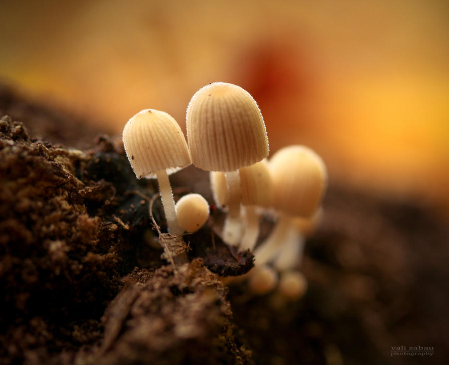 Little fungi by valiunic
