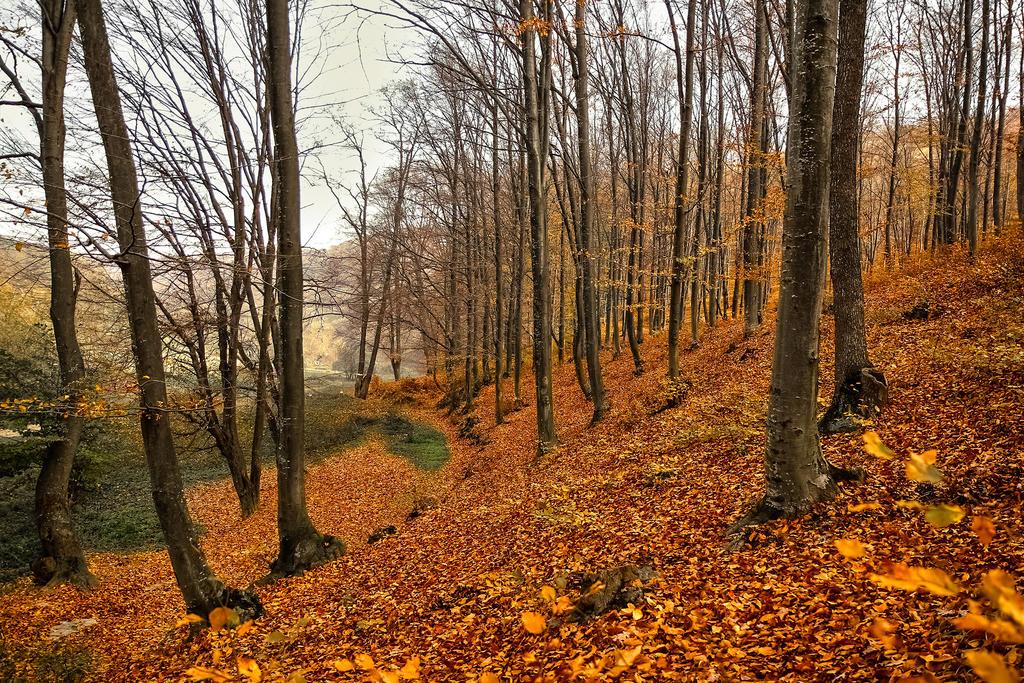 Fall carpet by valiunic