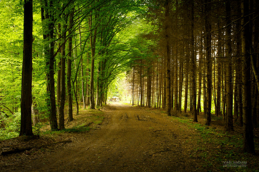 Forest Road by valiunic