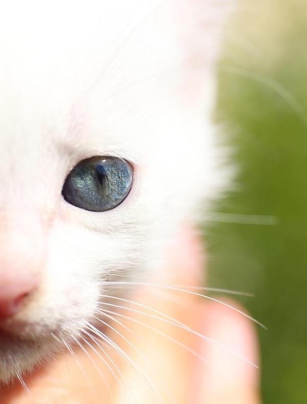 Kitty eye by valiunic