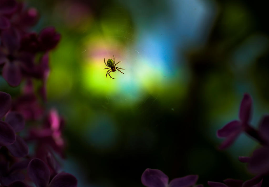 Little spider by valiunic
