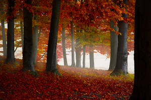 Foggy autumn forest by valiunic