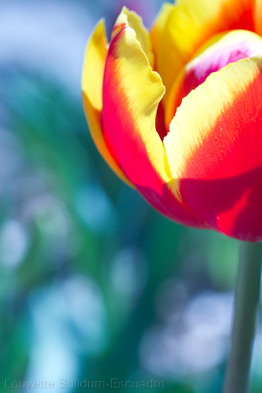 Floriade 2 by Louvette