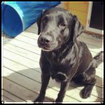 My Dog - May 2012