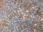 Dirt and Pine Needles Texture