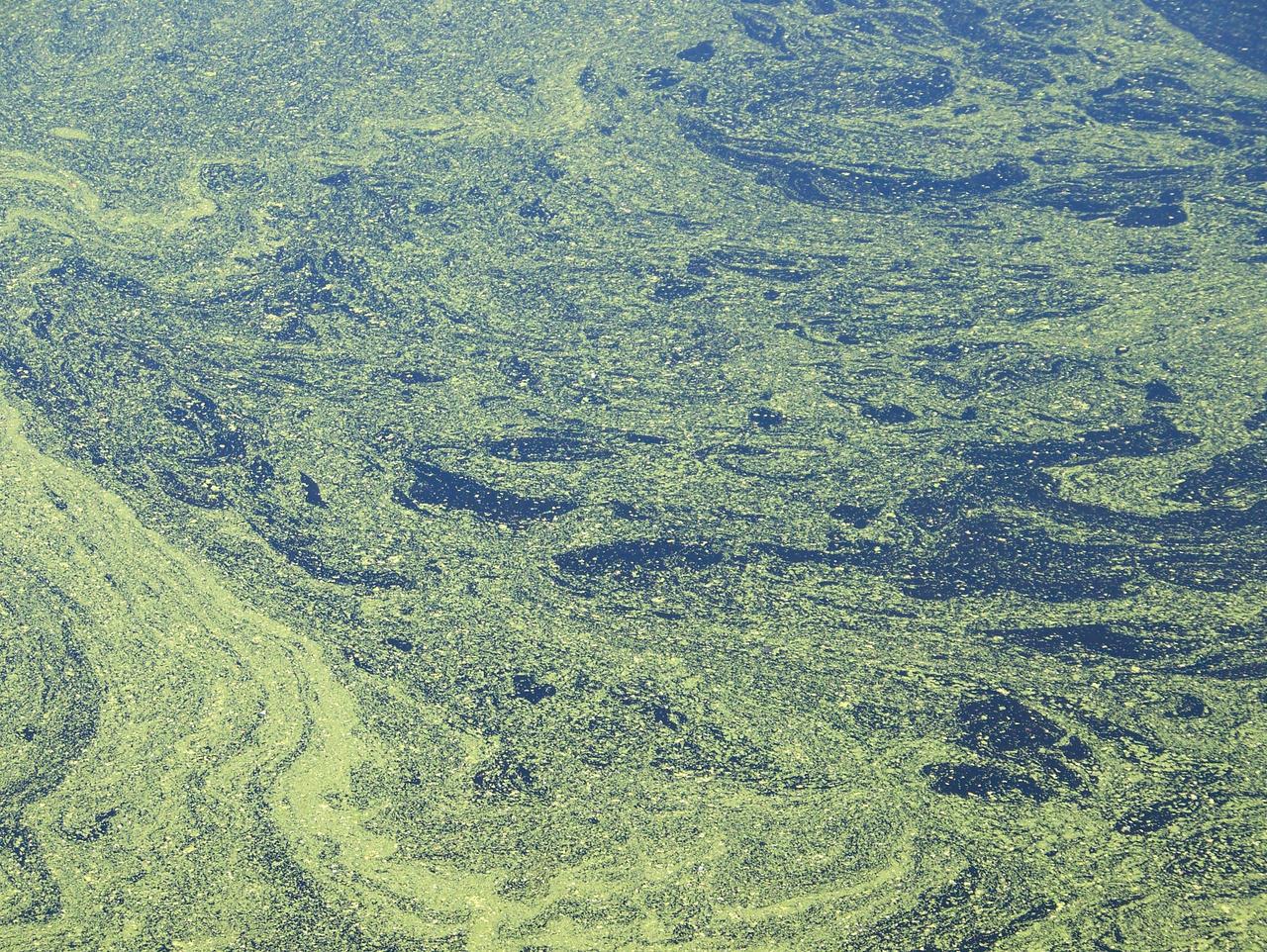 Pollen Water Texture 13