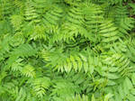 green leafy background