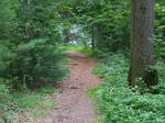 forest pathway stock