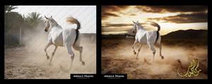 Arabian horse Making of