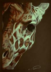 Baby Giraffe by RTyson