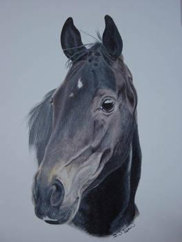 Black Stallion