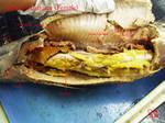 Bowfin Anatomy