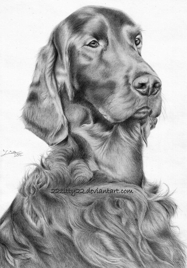 Irish Setter by 22Zitty22