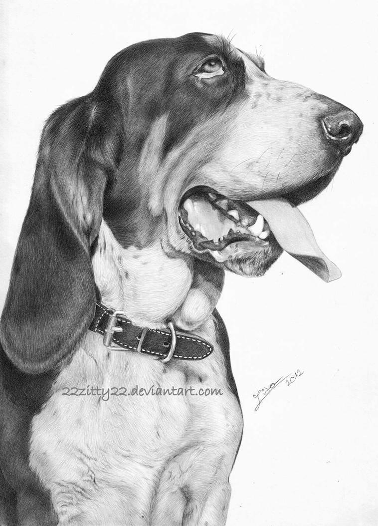 Basset hound by 22Zitty22