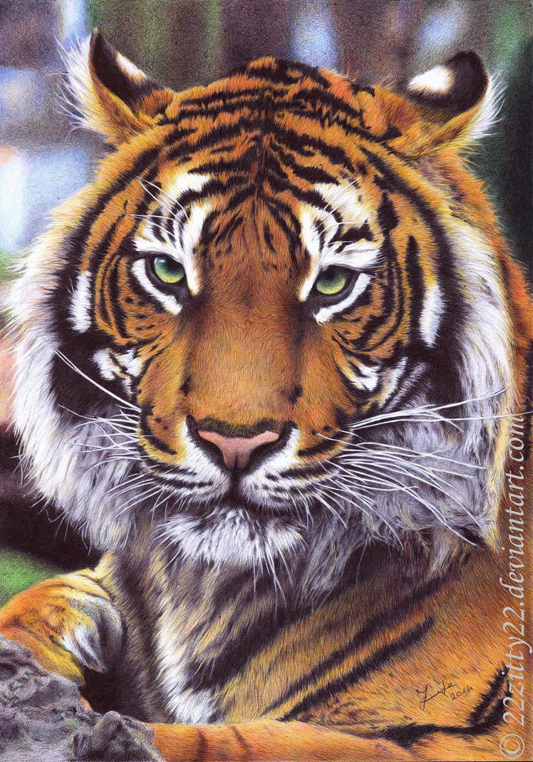 Tiger ballpen drawing by 22Zitty22