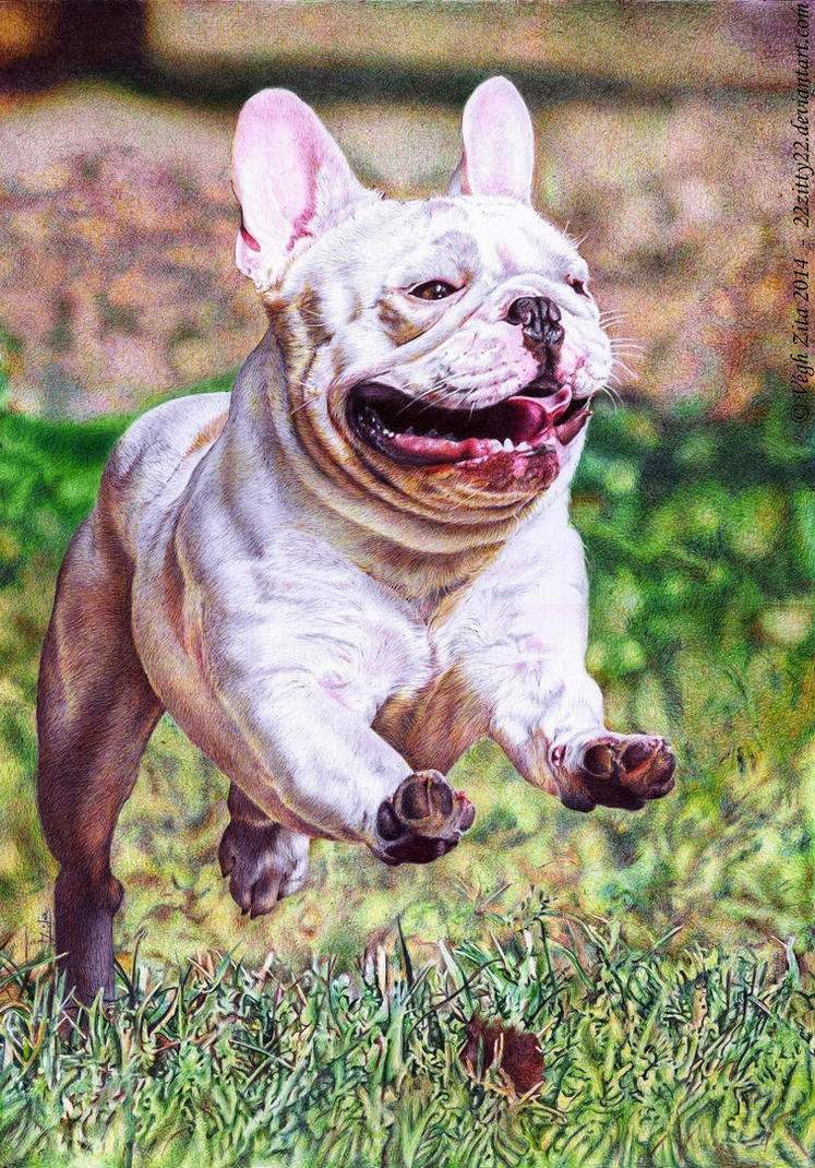 French Bulldog ballpen drawing by 22Zitty22