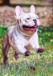 French Bulldog ballpen drawing