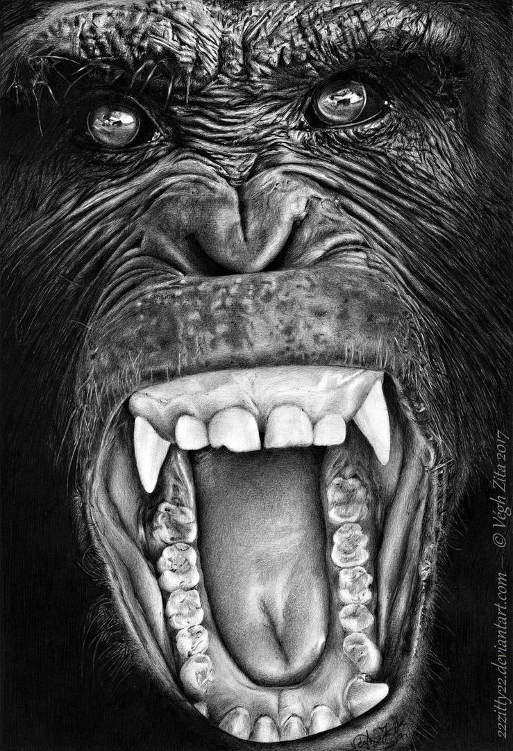 Chimp pen drawing by 22Zitty22