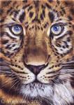 Big cat drawing