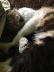My cute kitty #1