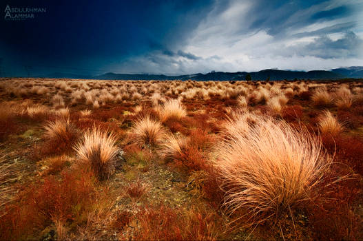 North NZ