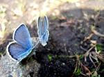 Blue Butterflies by xXlokiXx